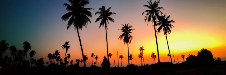 Palms silhouettes at orange sunset sky