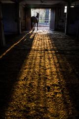 Spanischer Wallach im Stall bei Sonnenuntergang