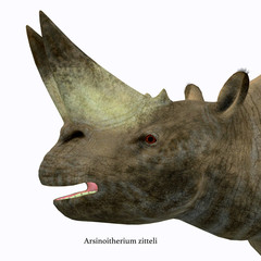 Arsinoitherium Mammal Head with Font - Arsinoitherium was a herbivorous rhinoceros-like mammal that lived in Africa in the Early Oligocene Period.