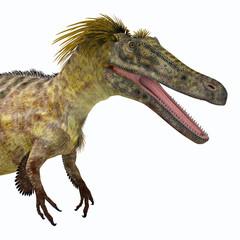 Austroraptor Dinosaur Head - Austroraptor was a carnivorous theropod dinosaur that lived in Argentina in the Cretaceous Period.