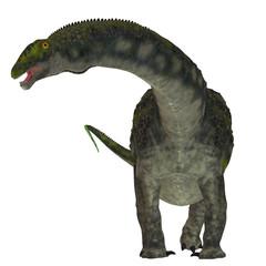 Diamantinasaurus Dinosaur on White - Diamantinasaurus was a herbivorous sauropod dinosaur that lived in Australia during the Cretaceous Period.