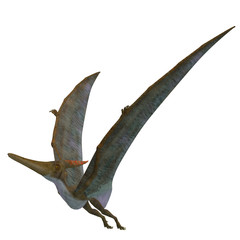 Pteranodon Reptile Wings Up - Pteranodon was a flying carnivorous reptile that lived in North America in the Cretaceous Period.