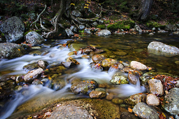 Cascade Brook in the White Mountains