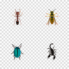 Realistic Poisonous, Emmet, Bug And Other Vector Elements. Set Of Insect Realistic Symbols Also Includes Sting, Insect, Wisp Objects.