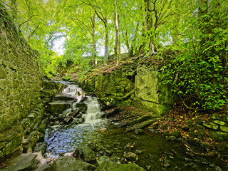 A woodland brook flows between a tree covered embankment and the remains of an old stone wall on the site of an abandoned watermill.