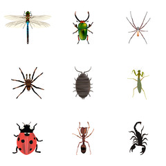Realistic Grasshopper, Arachnid, Damselfly And Other Vector Elements. Set Of Bug Realistic Symbols Also Includes Emmet, Grasshopper, Scorpion Objects.
