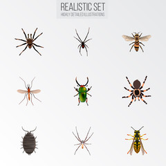 Realistic Spider, Wasp, Arachnid And Other Vector Elements. Set Of Bug Realistic Symbols Also Includes Alive, Green, Spider Objects.