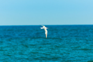 White bird seagull flying over turquoise sea, spread wings, clear blue sky. horizon, summer, freedom, inspirational