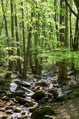 Der Fluss Bode bei Thale im Nationalpark Harz