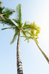 Summer Travel Vacation Concept. Beautiful Palms on Blue Sky Background with Light Beams.