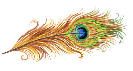 Peacock feather, watercolor painting, isolated on white background with clipping path.