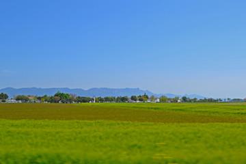 In de dag Lime groen Endless green wheat fields with blue sky in background.