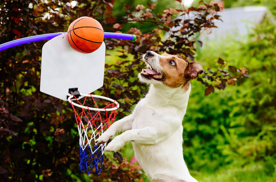 Funny basketball player catching ball above hoop