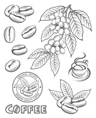 collection of coffee branch, beans and cup