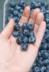 Freshly blueberries in female hand.
