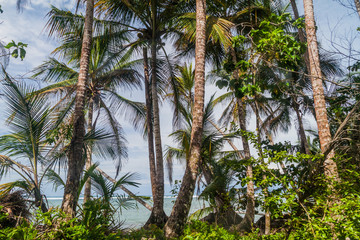 Palms in Cahuita National Park, Costa Rica