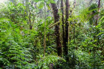 Cloud forest in National Park Volcan Baru, Panama.