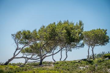 Vegetation auf Mallorca