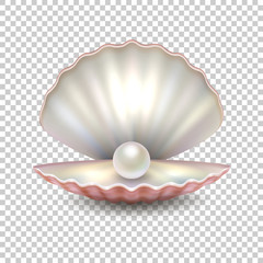 Realistic vector beautiful natural open sea pearl shell closeup isolated on transparent background. Design template, clipart, icon or mockup in EPS10.
