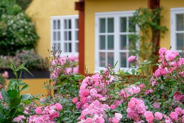 Fotorollo Skandinavien die Insel Bornholm