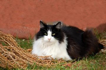 black white pet cat