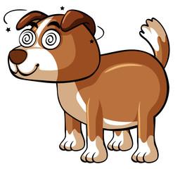 Dog with dizzy eyes