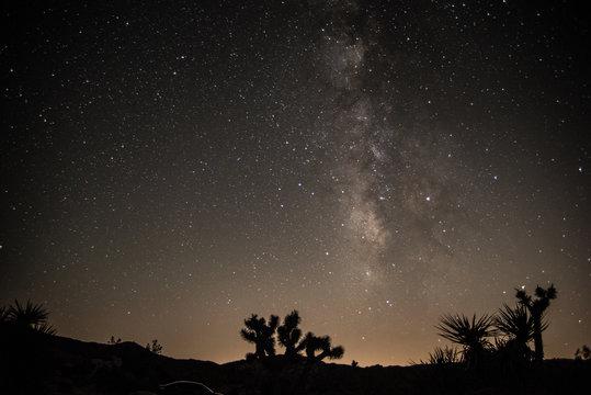 Milky way behind joshua trees