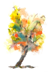 Colorful autumn tree on white , watercolor painting