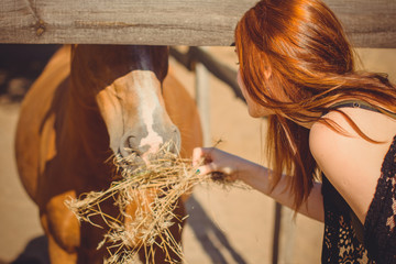 Woman with red hair and black dress and with horses on a farm, pets animals in village in a rancho. Horses are human friends