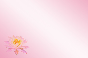 Soft focus lotus or water lily flower on pink pastel abstract background