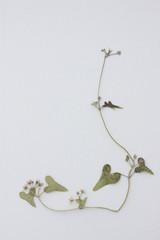 Botanical floral ornament