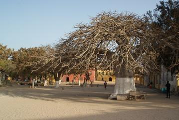 Baobab Gorée Sénégal