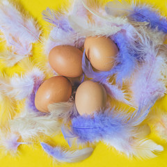 four fresh raw eggs in colorful feathers on yellow paper background. healthy eating and diet