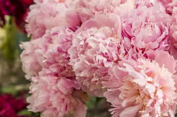closeup of beautiful bouquet of pink peony flowers