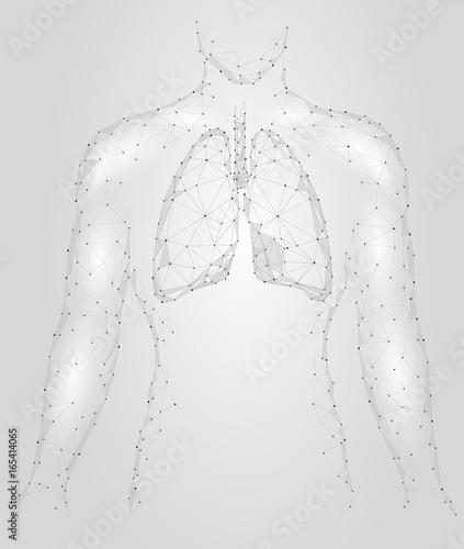 Human Lungs Pulmonary Infection Internal Organ Respiratory System
