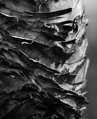 Tree Bark Black and White