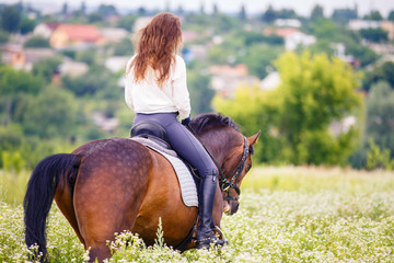 Young rider woman with curly brown hair in white shirt walking on camomile field. Rear view equestrian background with copy space
