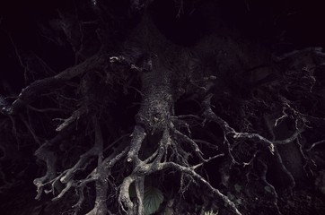 dark tree roots forest detail background