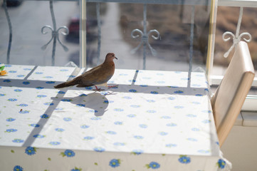 balkonda güvercin