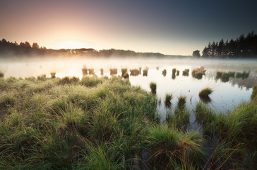 Wall Mural - tranquil misty sunrise on wild lake