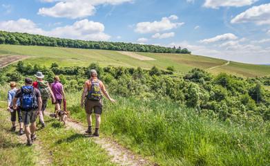 Wandern in den Weinbergen in Rheinhessen