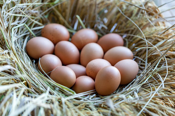 Eggs in a nest made of straw