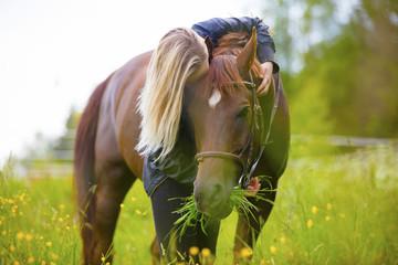 Blonde woman standing in a meadow hugging her arabian horse