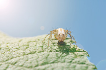 Yellow Spider Sitting On Green Leaf In Sunny Day