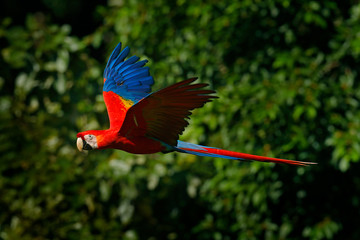 Types of Parrots in Australia  Australian Travel Guide