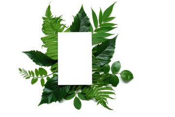 Creative layout with green leaves and blank white greeting card. Nature concept