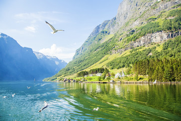Sognefjord in Norway, natural landscape