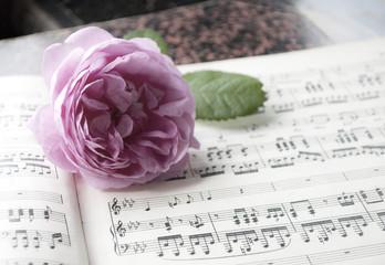 Alte Musiknoten mit erblühter Rose (Rosaceae), Hochzeit, Valentinstag, Muttertag