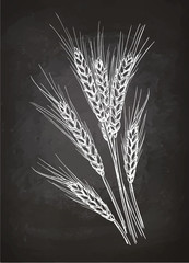 Chalk sketch of ears of wheat