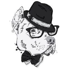 Pit bull in a hat and tie. Dog vector. Vector illustration for greeting card, poster, or print on clothes.